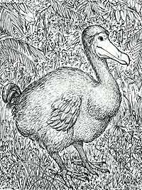 The Dodo Bird  History Story and Resources for Dodobirds