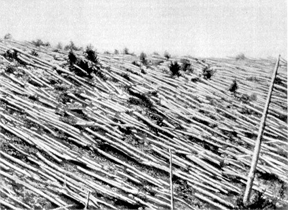 Tunguska, Psychopathy and the Sixth Extinction