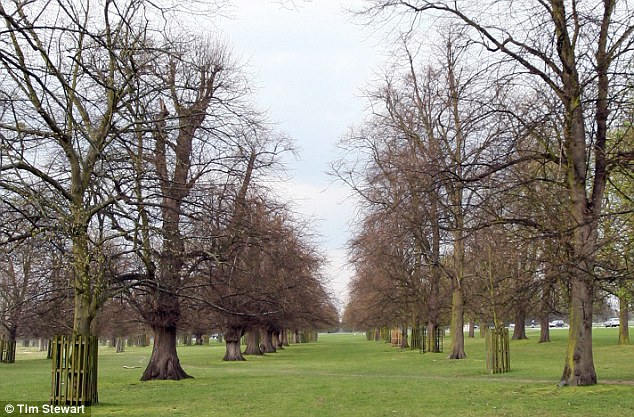 UK - What a difference a year makes: Pictures reveal how many trees STILL have no leaves after harsh winter