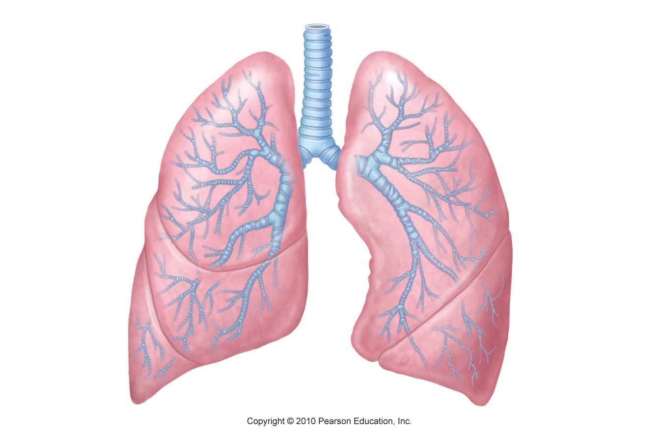 Mysterious Respiratory Illness Is Spreading In Ohio