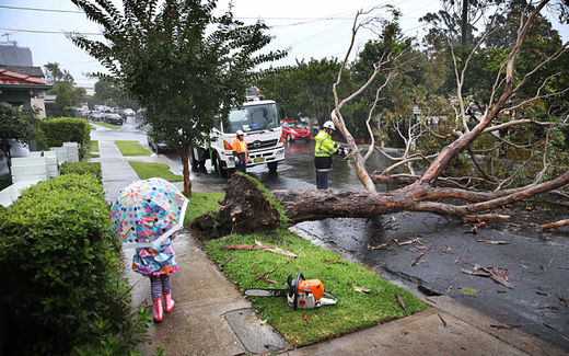 tree down after storm in Sydney, Australia