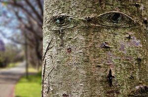 tree with eyes
