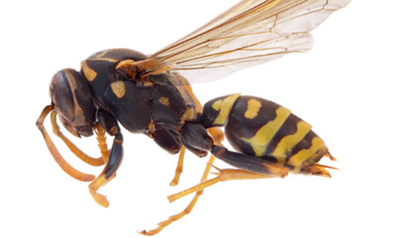 New wasp study finds sting in the tail for cancer cells ...