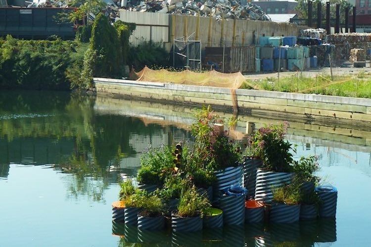 Floating Landscape On Gowanus Canal Ny Purifies One Of