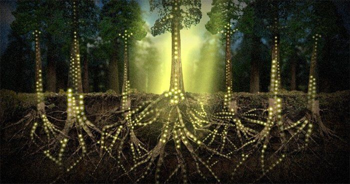 la red social de los árboles