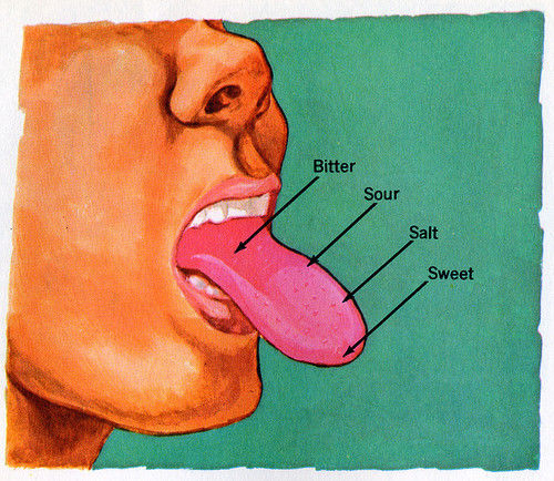 The taste bud map you learned in school is wrong    tastes are