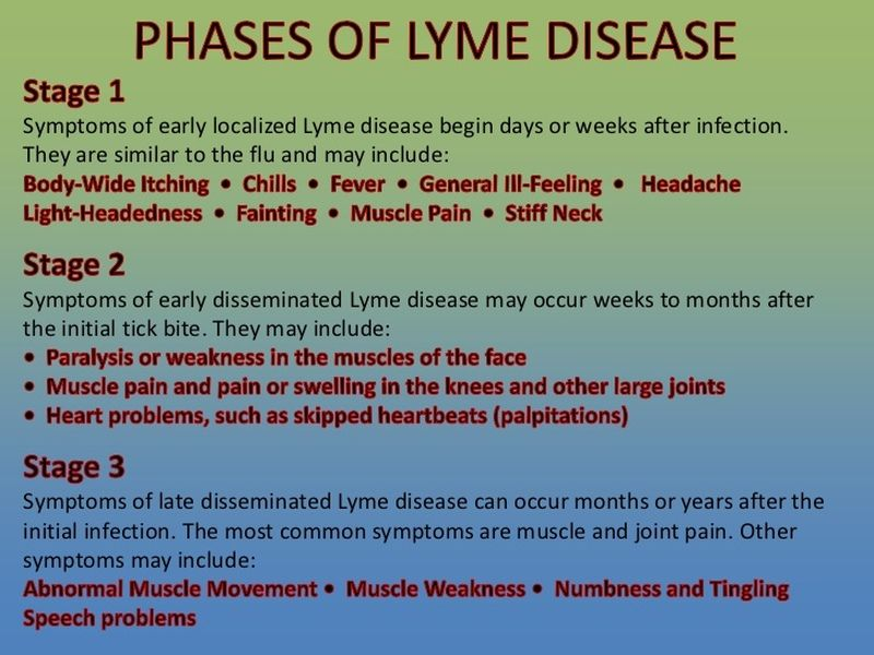 The Health Amp Wellness Show A Close Look At Lyme Disease