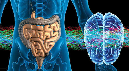 brain gut connection