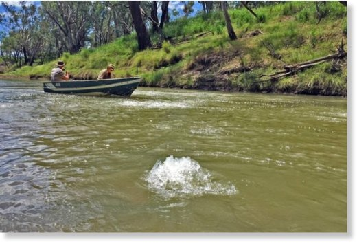 Scientists are trying to identify the cause of methane gas bubbling in the Condamine River.