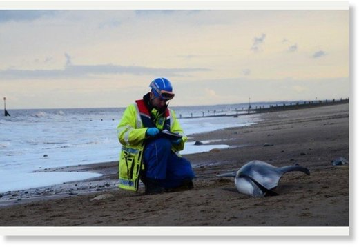 A Hornsea Coastguard officer with the dolphin.