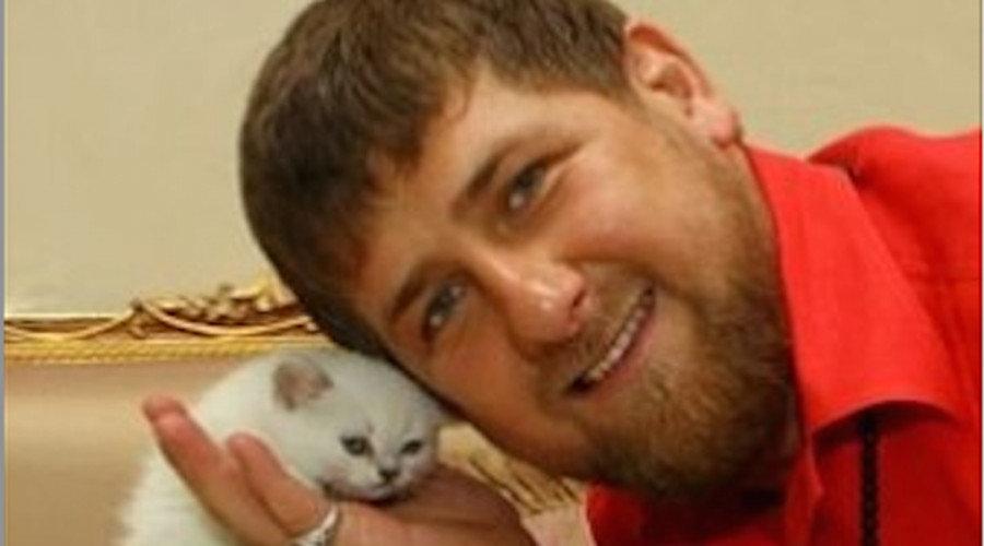 кадыров с котенком фото