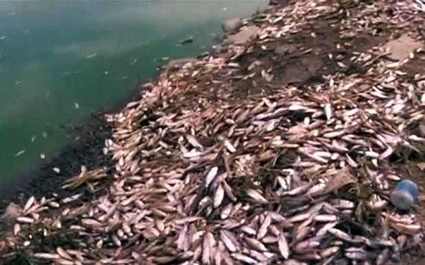 Thousands Of Dead Fish Wash Ashore At Lake Alalay Bolivia