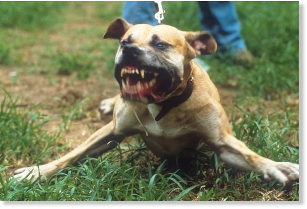 Nearly 2000 Uk Children Savaged By Dogs Every Year As