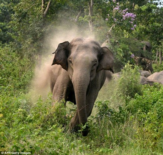 528 died in human-elephant conflict in the Indian state of Odisha in last 5 years