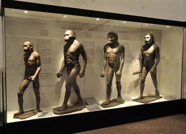 Hominin Diorama Museum Of Natural History