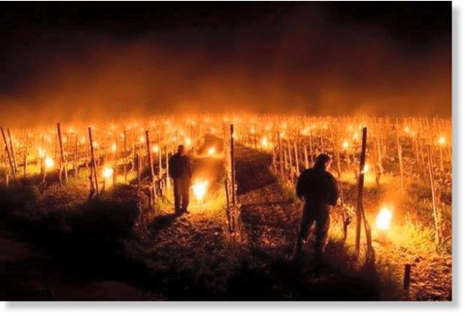 Farmers in Grisons, Switzerland protecting their vineyards from frost on April 27 with thousands of fire lights.