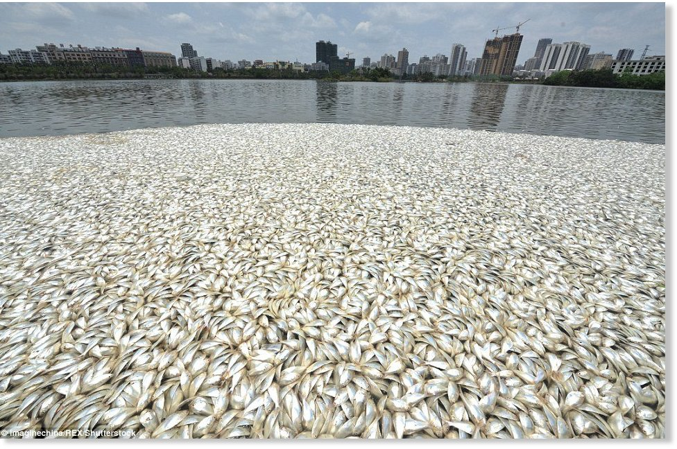 30 tonnes of dead fish appear in a haikou lake china for Fish at 30 lake