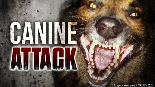 Woman in serious condition after grandson's dog attacks her in Pittsburgh, Pennsylvania