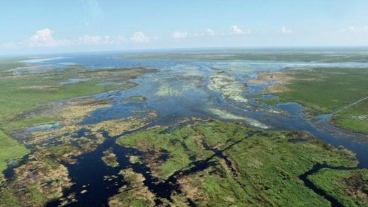 Florida algal blooms