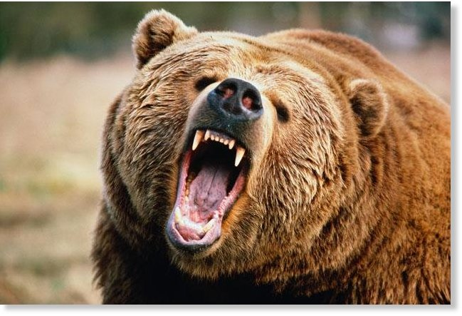 Brown bear mauls 2 guides near Sitka, Alaska -- Earth ...