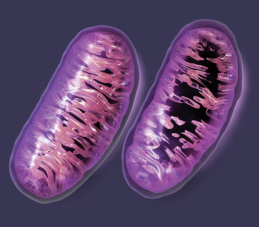"Thanks Big Pharma for the Mitochondrial ""collateral damage"""