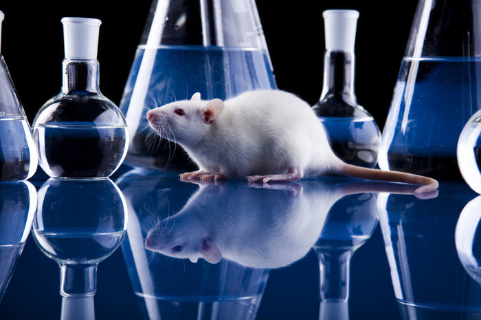 "a research on vivisection Vivisection: pros & cons many people today there must be experimental research, and affirmed that ""vivisection is indispensable for physical research."
