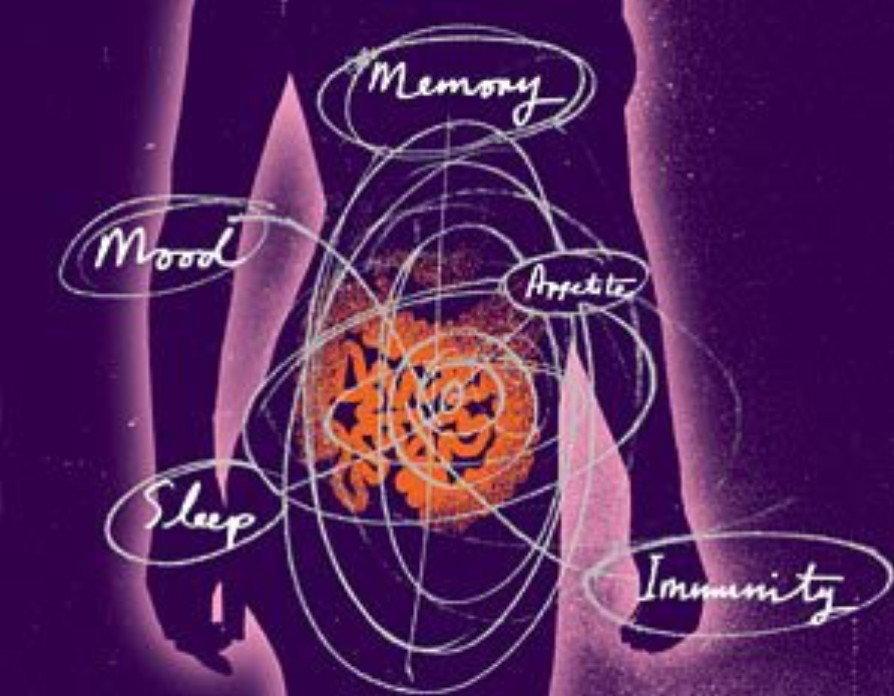 health_memory_mood_appetite_im.jpg