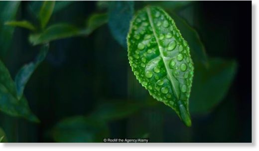 Quantum physics explain photosynthesis