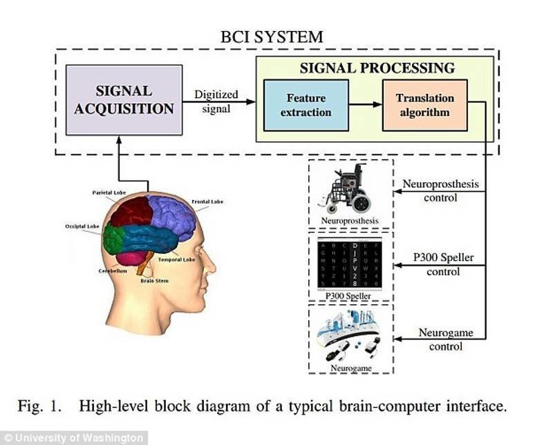brain computer interface essay Brain computer interface research paper keys  writing a conclusion in a research paper should we have zoos persuasive essay (effects of drugs on the brain.