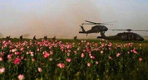afghanistan poppy field