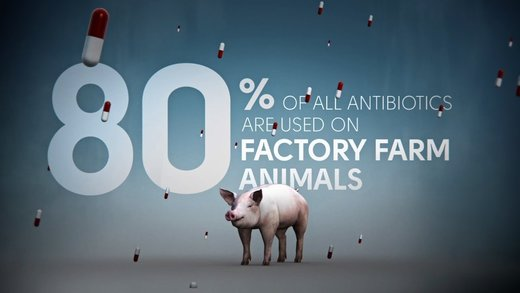 CDC confirms link between factory farms & superbugs