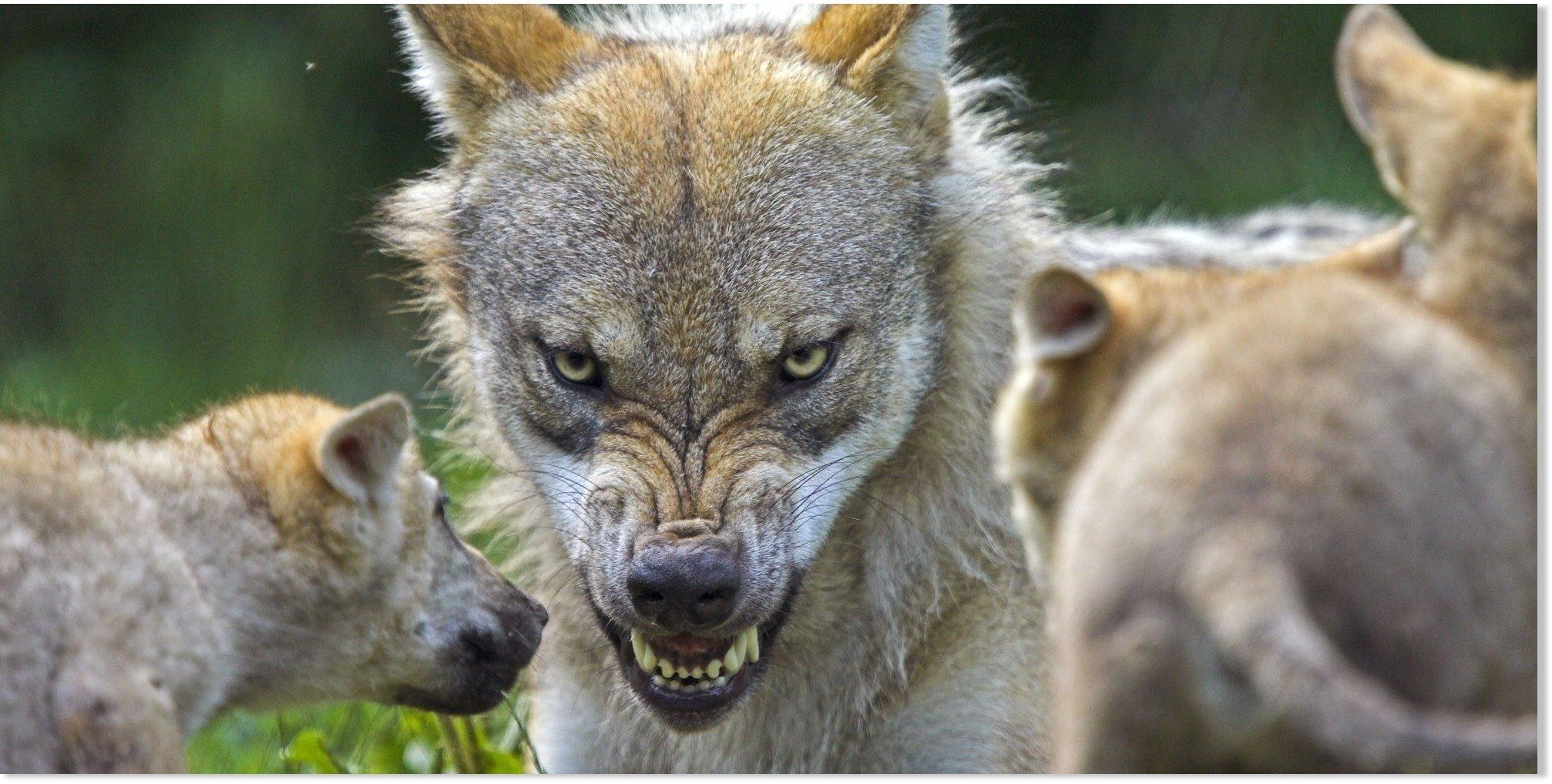 Wolf Nude Photos 63