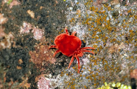 red spider mite pesticides