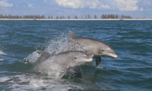 Alarming levels of mercury found in Florida Everglades dolphins; highest concentration ever recorded