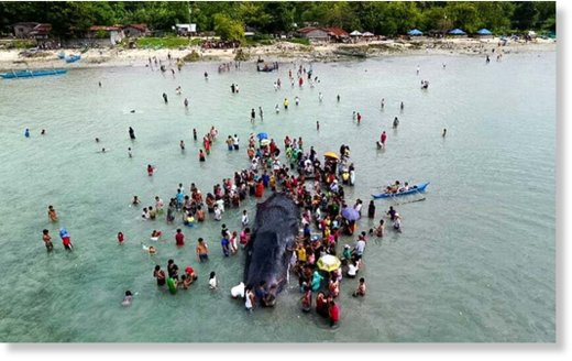 Beachgoers and residents gather around a beached whale in Babak, Samal on Saturday, December 17, 2016. The whale was alive Friday night, but died Saturday