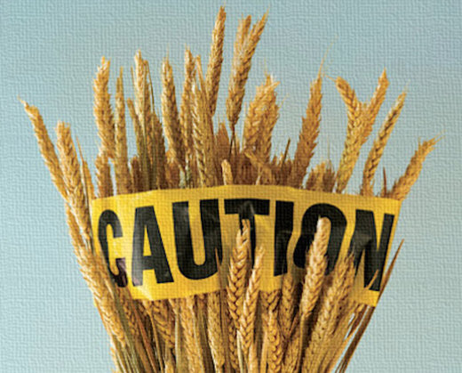 caution wheat