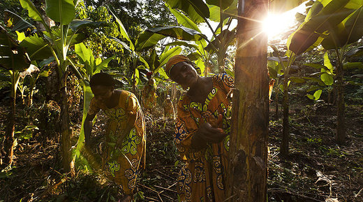 World Wide Fund For Nature Alleged Human Rights Abuses