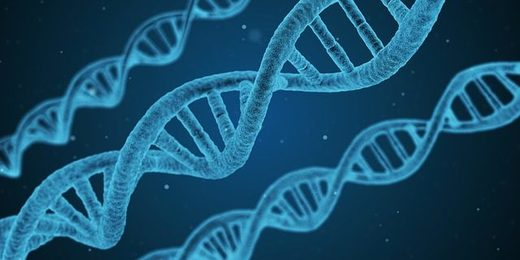 New science says that DNA is not the all powerful molecule biologists make it out to be