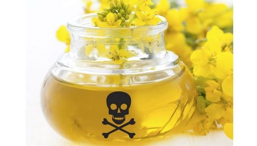 poisonous canola oil