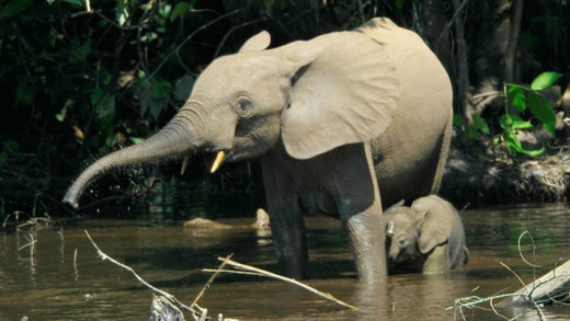 Brutal ivory trade: Poachers are decimating elephant populations in Africa's most important nature preserve