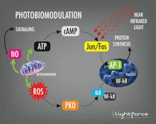 Photobiomodulation Therapy Healing The Body With Light