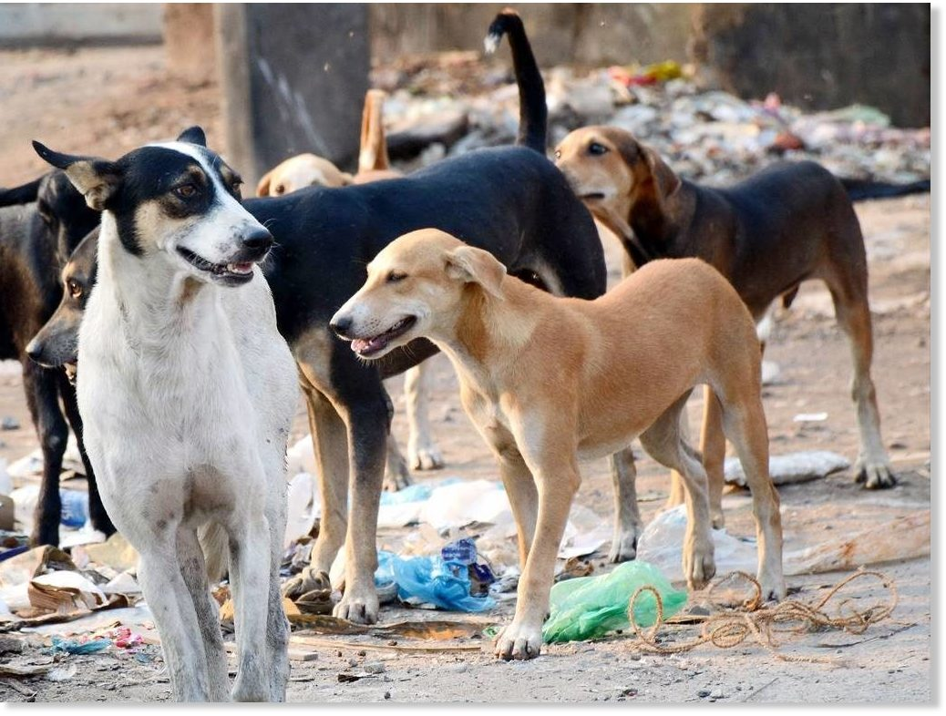 Stray Dogs Rescue