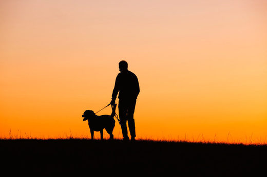 Why losing a dog can be just as hard as losing a relative or friend
