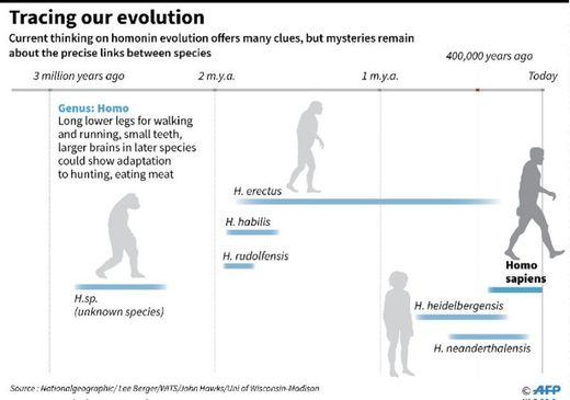 neanderthal evoloution