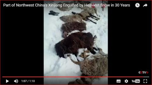 Heaviest snow in 30 years engulfs parts of Xinjiang, China