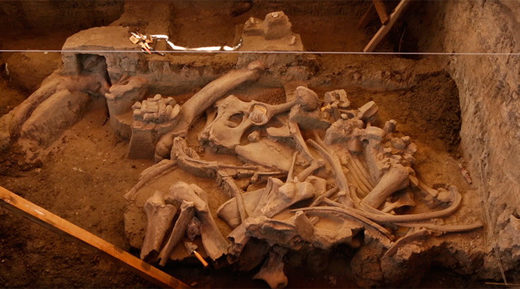 Excavation of 14,000-yo mammoth reveals new information on ancient humans