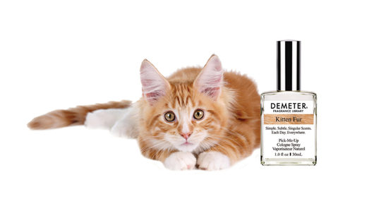 Eau de kitty: Perfume maker debuts kitten fur fragrance