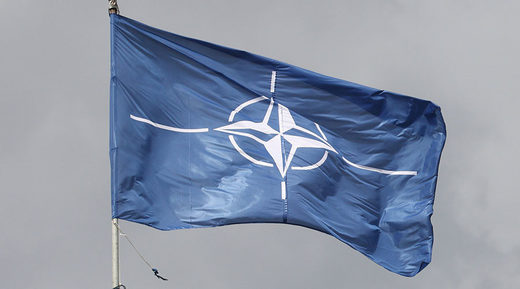 NATO resembles a baboon troop with US the 'twitchy alpha male'