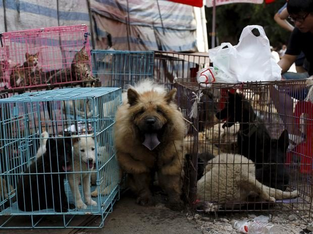 Dogs Getting Eaten In China