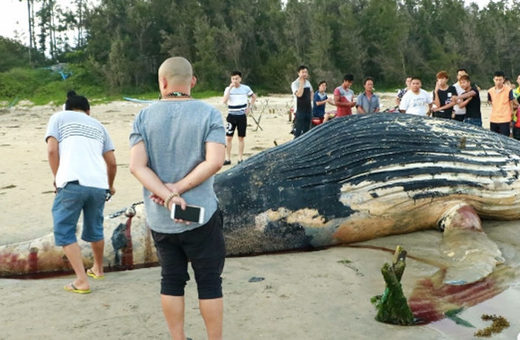 Another dead whale found in South China